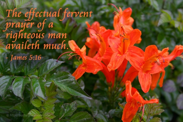 The effectual fervent prayer of a righteous man availeth much. - James 5:16