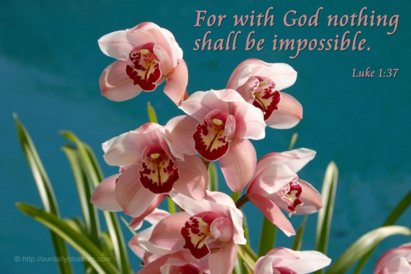 For with God nothing shall be impossible. - Luke 1:37