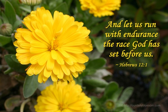 And let us run with endurance the race God has set before us. ~ Hebrews 12:1