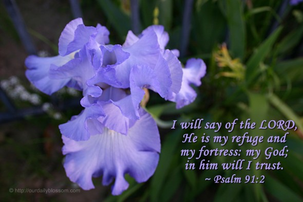 I will say of the LORD, He is my refuge and my fortress: my God; in him will I trust. ~ Psalm 91:2
