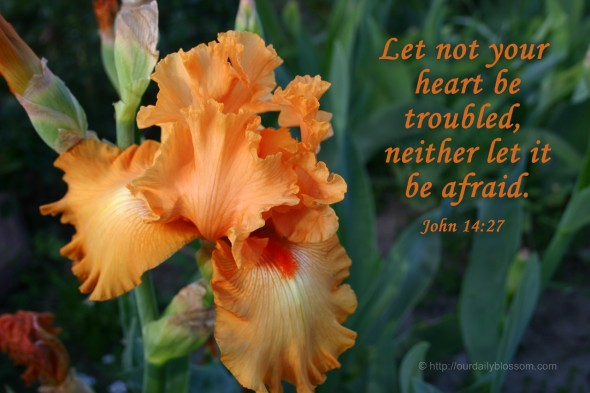 Let not your heart be troubled, neither let it be afraid. ~ John 14:27