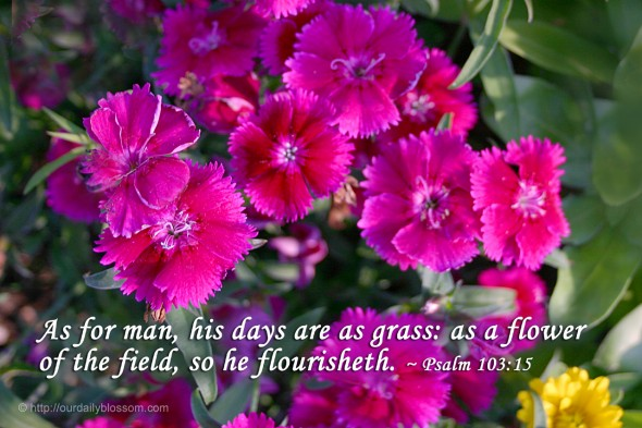 As for man, his days are as grass: as a flower of the field, so he flourisheth. ~ Psalm 103:15