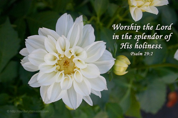Worship the Lord in the splendor of His holiness. ~ Psalm 29:2