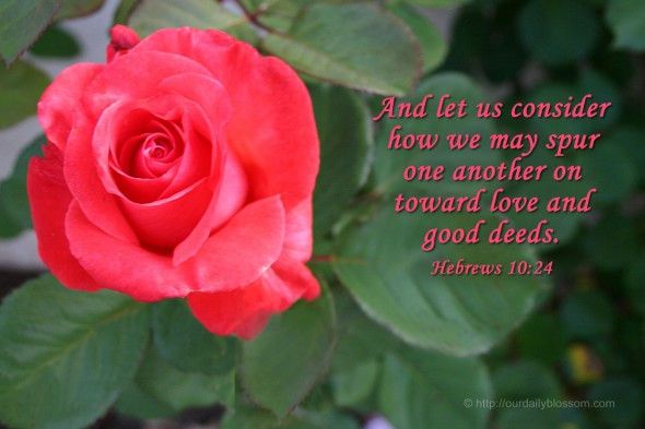 And let us consider how we may spur one another on toward love and good deeds. ~ Hebrews 10:24