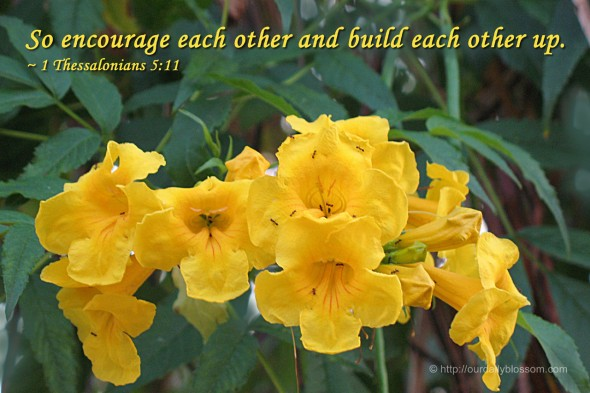So encourage each other and build each other up. ~ 1 Thessalonians 5:11