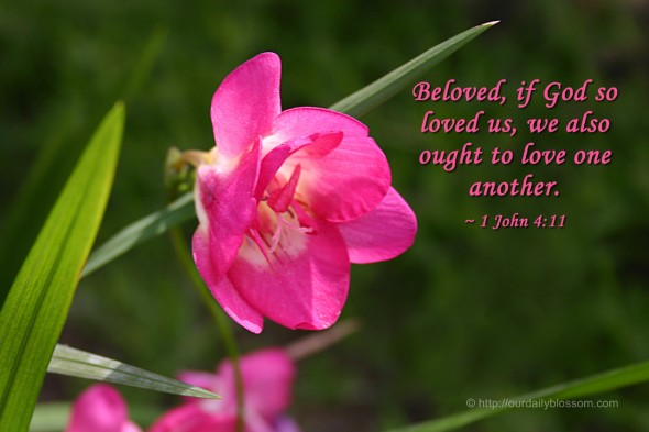 Beloved, if God so loved us, we also ought to love one another. ~ 1 John 4:11