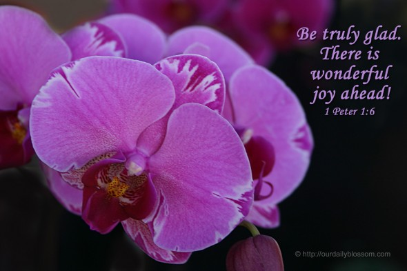 Be truly glad. There is wonderful joy ahead! ~ I Peter 1:6