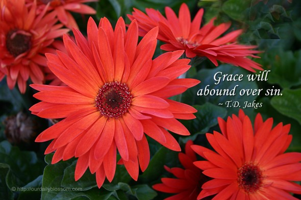 Grace will abound over sin. ~ T.D. Jakes