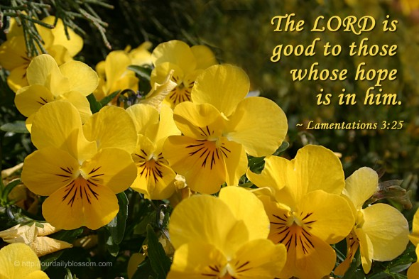 The LORD is good to those whose hope is in him. ~ Lamentations 3:25