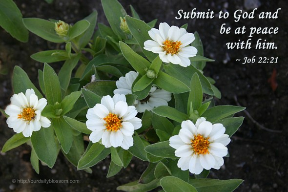 Submit to God and be at peace with him. ~Job 22:21