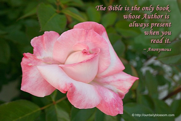The Bible is the only book whose Author is always present when you read it. ~ Anonymous