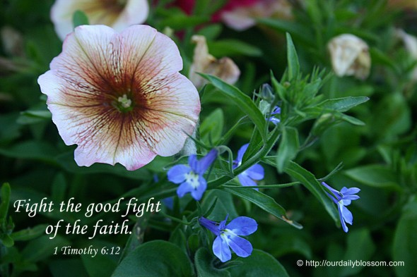 Fight the good fight of the faith. ~ 1 Timothy 6:12