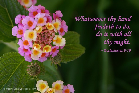 Whatsoever thy hand findeth to do, do it with all thy might. ~ Ecclesiastes 9:10