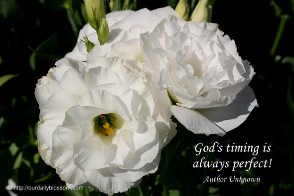 God's timing is always perfect! ~ Author Unknown