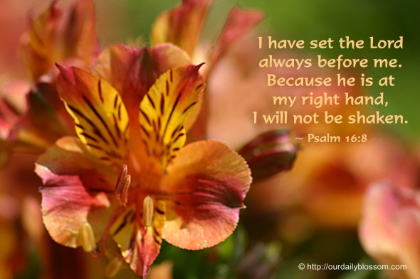 I have set the Lord always before me. Because he is at my right hand, I will not be shaken. ~ Psalm 16:8