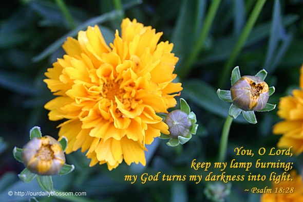 You, O Lord, keep my lamp burning; my God turns my darkness into light. ~ Psalm 18:28