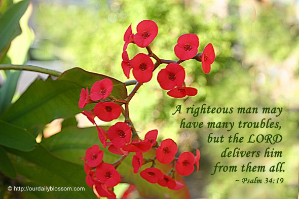 A righteous man may have many troubles, but the LORD delivers him from them all. ~ Psalm 34:19