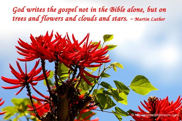 God writes the gospel not in the Bible alone, but on trees and flowers and clouds and stars. ~ Martin Luther