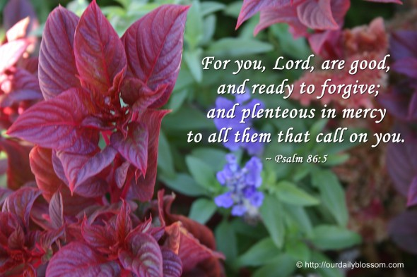 For you, Lord, are good, and ready to forgive; and plenteous in mercy to all them that call on you. ~ Psalm 86:5