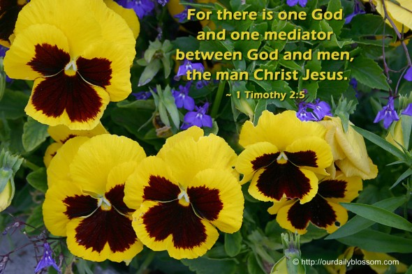 For there is one God and one mediator between God and men, the man Christ Jesus. ~ 1 Timothy 2:5