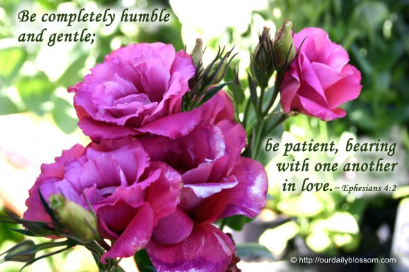 Be completely humble and gentle; be patient, bearing with one another in love. ~ Ephesians 4:2
