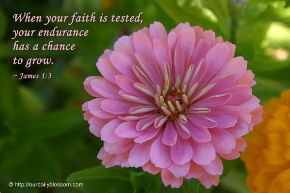 When your faith is tested, your endurance has a chance to grow. ~ James 1:3