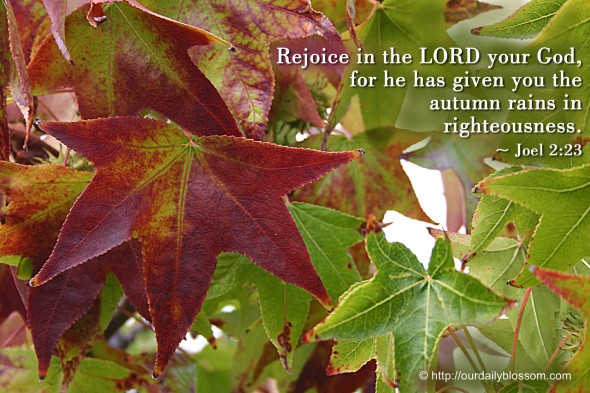 Rejoice in the LORD your God, for he has given you the autumn rains in righteousness. ~ Joel 2:23