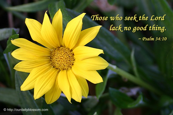Those who seek the Lord lack no good thing. ~ Psalm 34:10