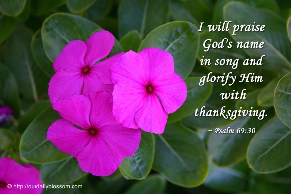 I will praise God's name in song and glorify him with thanksgiving. ~ Psalm 69:30