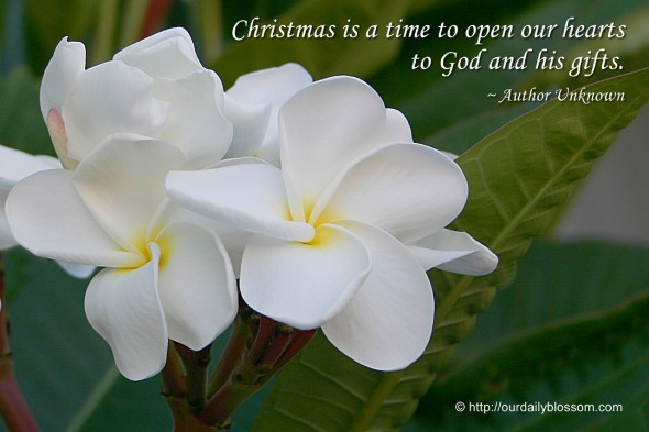 Christmas is a time to open our hearts to God and his gifts. ~ Author Unknown