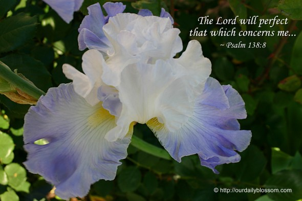 The Lord will perfect that which concerns me. ~ Psalm 138:8