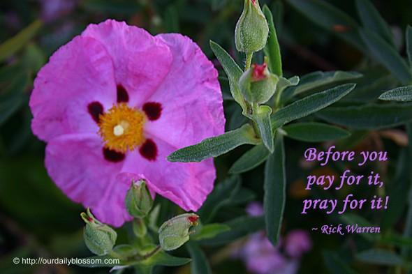Before you pay for it pray for it! ~ Rick Warren
