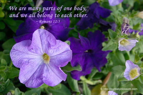We are many parts of one body, and we all belong to each other. ~ Romans 12:5