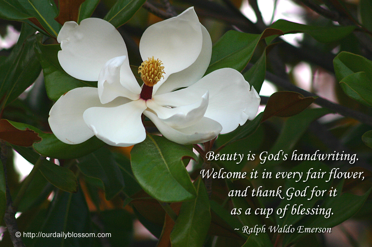 Flower beauty quotes beautiful flower quotes about life color my view full size izmirmasajfo