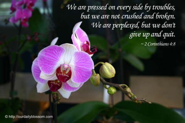 We are pressed on every side by troubles, but we are not crushed and broken. We are perplexed, but we don't give up and quit. ~ 2 Corinthians 15:10