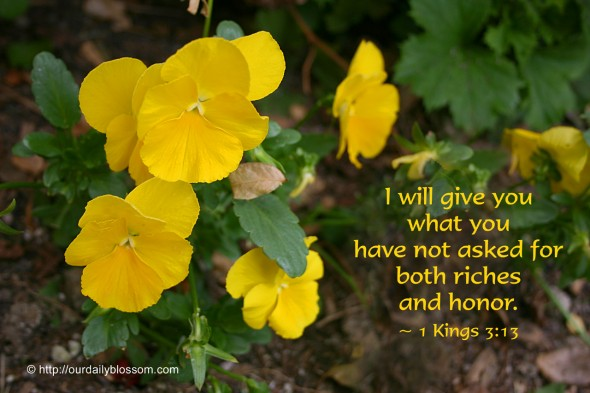 I will give you what you have not asked for, both riches and honor. ~ 1 Kings 3:13