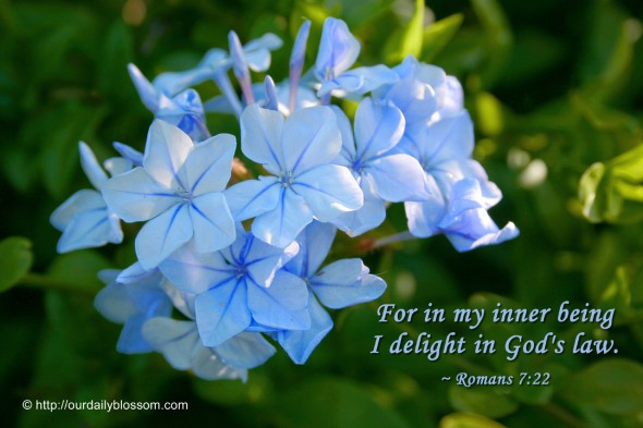 For in my inner being I delight in God's law. ~ Romans 7:22