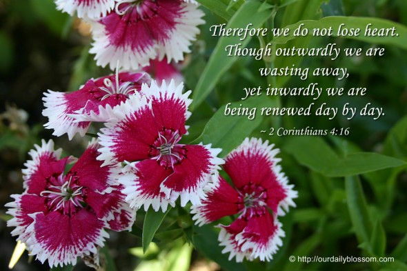 Therefore we do not lose heart. Though outwardly we are wasting away, yet inwardly we are being renewed day by day. ~ 2 Corinthians 4:16