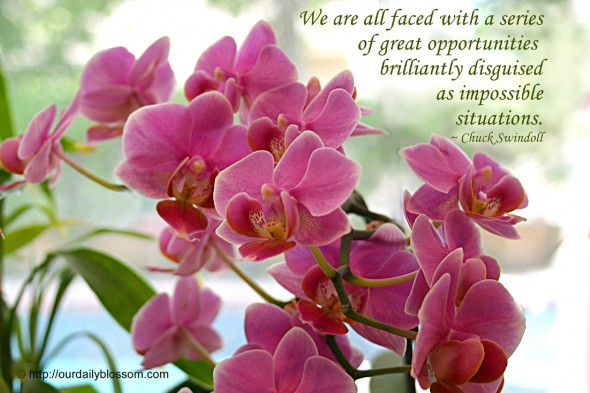 We are all faced with a series of great opportunities brilliantly disguised as impossible situations. ~ Chuck Swindoll