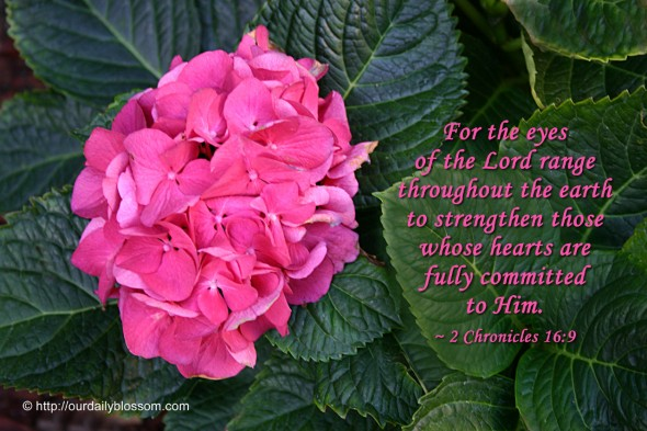 For the eyes of the Lord range throughout the earth to strengthen those whose hearts are fully committed to Him. ~ 2 Chronicles 16:9