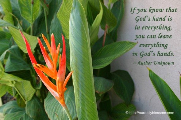 If you know that God's hand is in everything, you can leave everything in God's hands. ~ Author Unknown