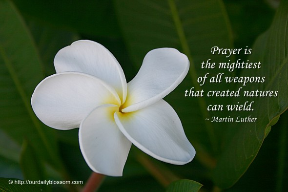 Prayer is the mightiest of all weapons that created natures can wield. ~ Martin Luther
