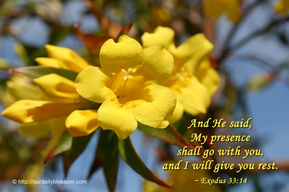 And He said, My presence shall go with you, and I will give you rest. ~ Exodus 33:14
