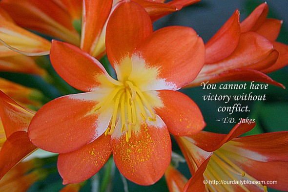 You cannot have victory without conflict. ~ T.D. Jakes