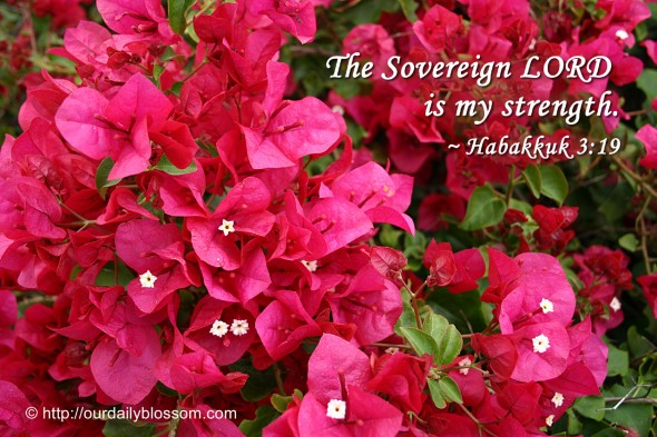 The Sovereign LORD is my strength. ~ Habakkuk 3:19