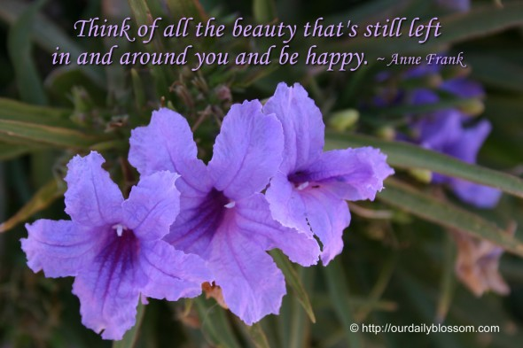 Think of all the beauty that's still left in and around you and be happy. ~ Anne Frank