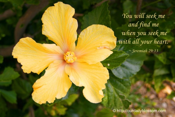You will seek me and find me, when you seek me with all your heart. ~ Jeremiah 29:13