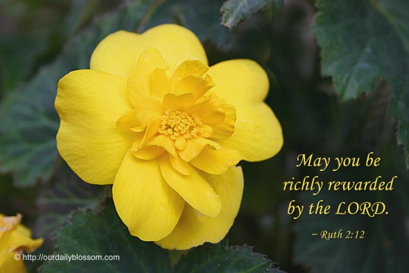 May you be richly rewarded by the LORD. ~ Ruth 2:12