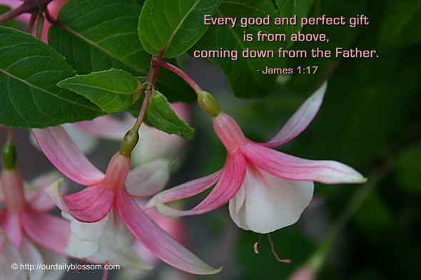 Every good and perfect gift is from above, coming down from the Father. ~ James 1:17