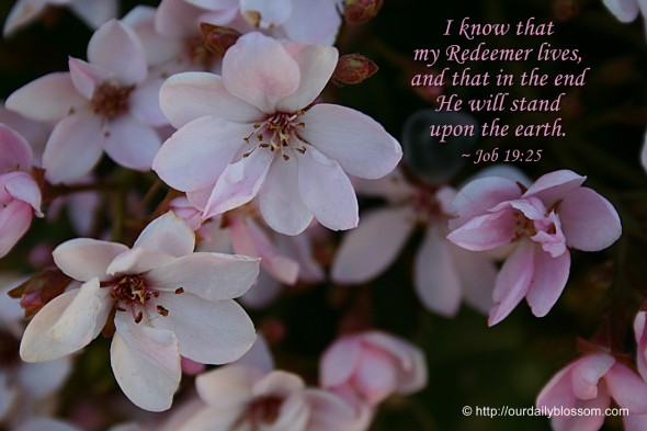 I know that my Redeemer lives, and that in the end he will stand upon the earth. ~ Job 19:25